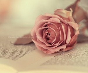 rose, book, and pink image