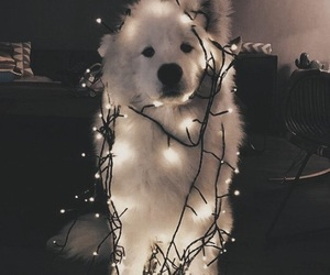 animal, christmas, and dog image