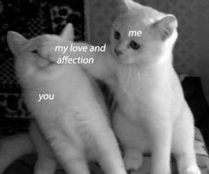 affection, black and white, and cats image