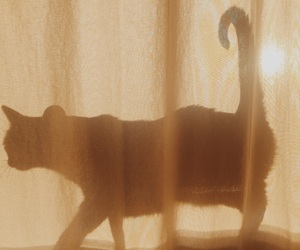 cat, shadow, and curtain image