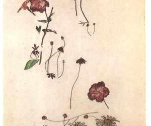 art, egon schiele, and flowers image