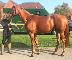 bloodstock services, horse racing syndication, and foaling services image