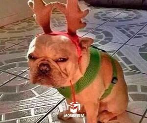 christmas, dog, and rodolfo image