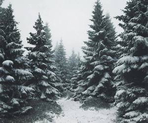 cold, nature, and winter image