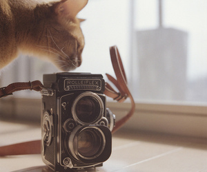 photo, cat, and cute image