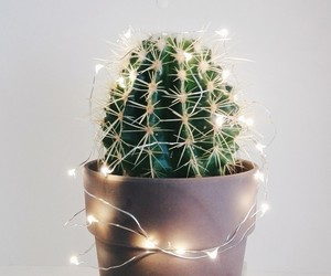 cactus, christmas, and lights image