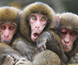 animal, monkey, and friends image