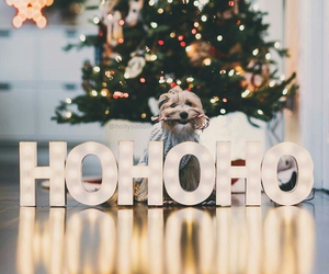 christmas, dog, and hohoho image