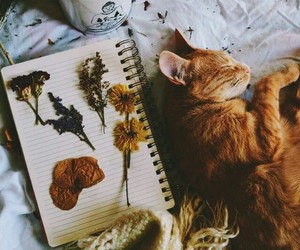 cat, autumn, and flowers image