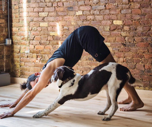 animals, dog, and fitness image