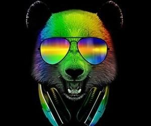 animal art, bear, and bears image