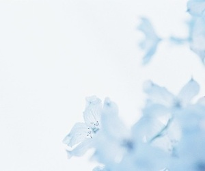 blue, aesthetic, and flowers image
