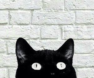 cat, wallpapers, and lockscreens image