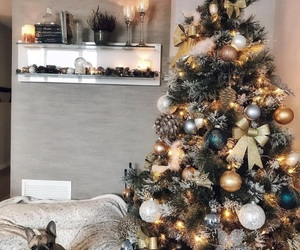christmas, home, and pet image