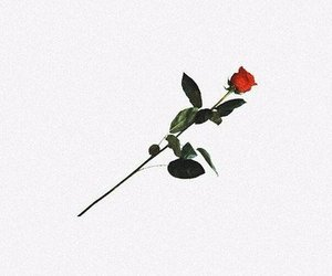 header, rose, and twitter image