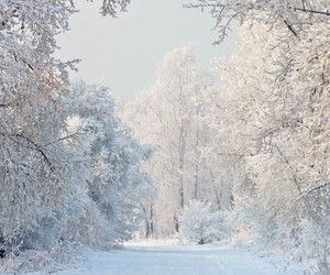forest, holiday, and snow image