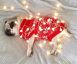 christmas, lights, and dog image