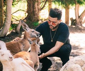 australia, kangaroo, and Lyrics image
