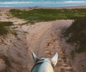 beach, hearts, and horse image
