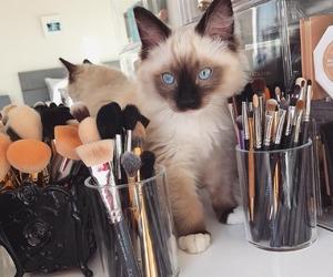 cat, makeup, and pet image