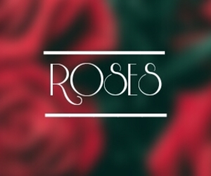 header, red, and roses image