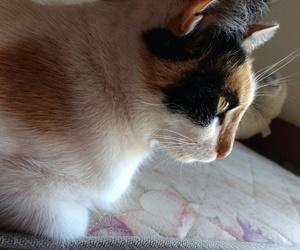 cat, loca, and michi image