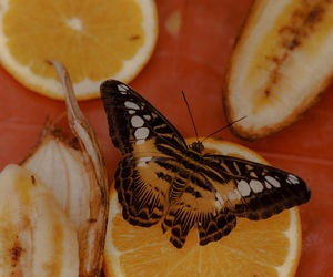butterfly and orange image