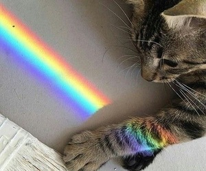 cat, catlover, and rainbow image