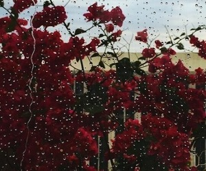flowers, rain, and rose image