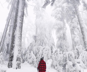christmas, forest, and mountain image