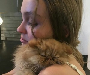 cat, cat love, and lily rose depp image