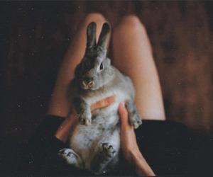 rabbit, cute, and vintage image