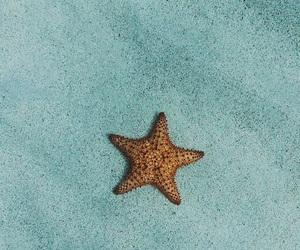 sea, starfish, and wallpaper image