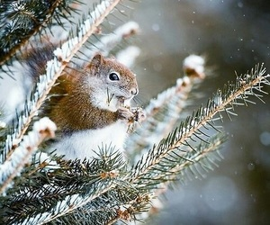 animals, winter, and cute image