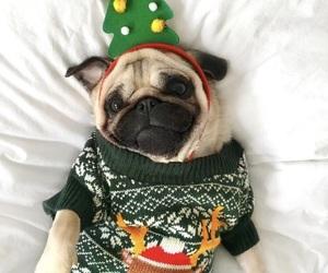animal, christmas, and dog image