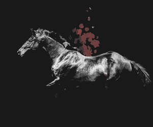 animals, black, and horse image