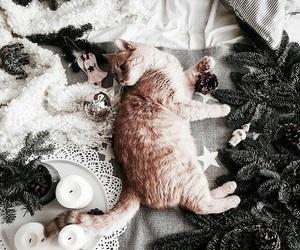 christmas, cat, and animal image