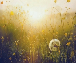 flowers, grass, and sun image