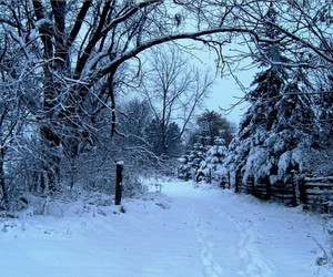 december, snow, and trees image