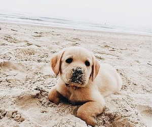 dog, beach, and puppy image
