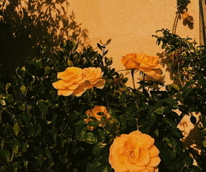 flowers, yellow, and header image