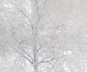nature, pictures, and snow image