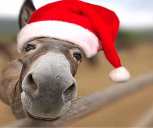 adorable, donkey, and cute image