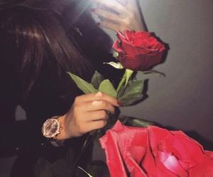 red rose image