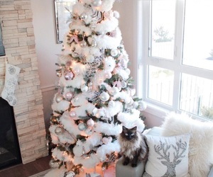 cat, cozy, and december image