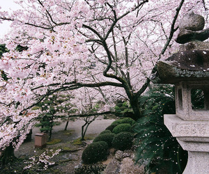 aesthetic, japan, and cherry blossom image