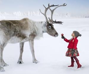 christmas, reindeer, and snow image