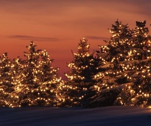 christmas, lights, and christmas trees image