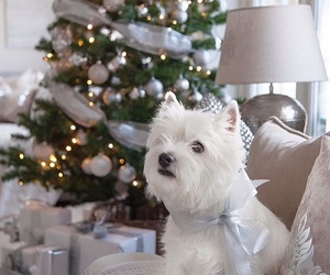 animals, christmas, and decorations image