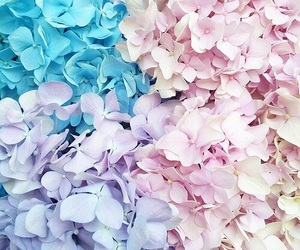 pastel, flowers, and cute image
